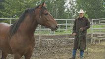 Wild-Horse-Wild-Ride-Katie-Merrit